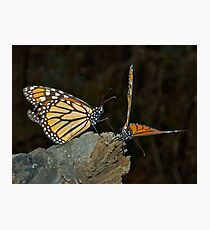 Mating Dance Photographic Print