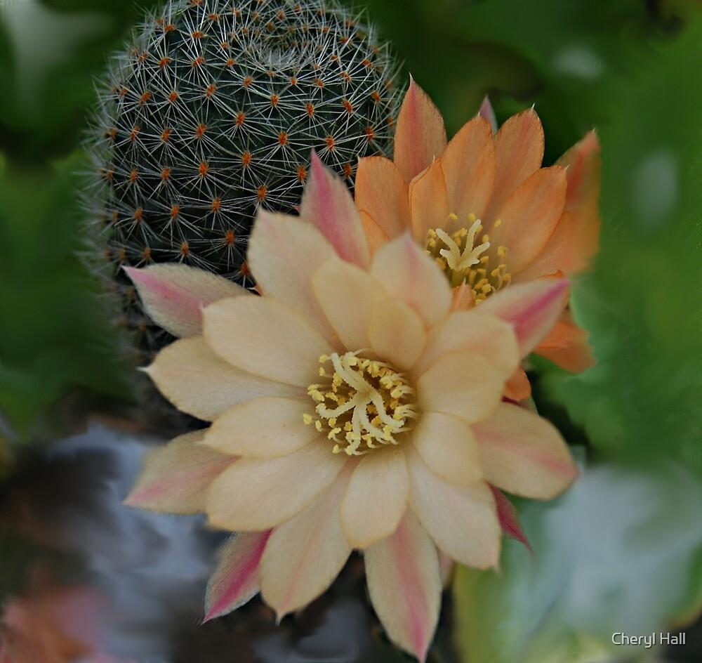 Cactus Flower by Cheryl Hall