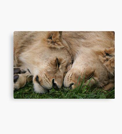 Cub Love Canvas Print