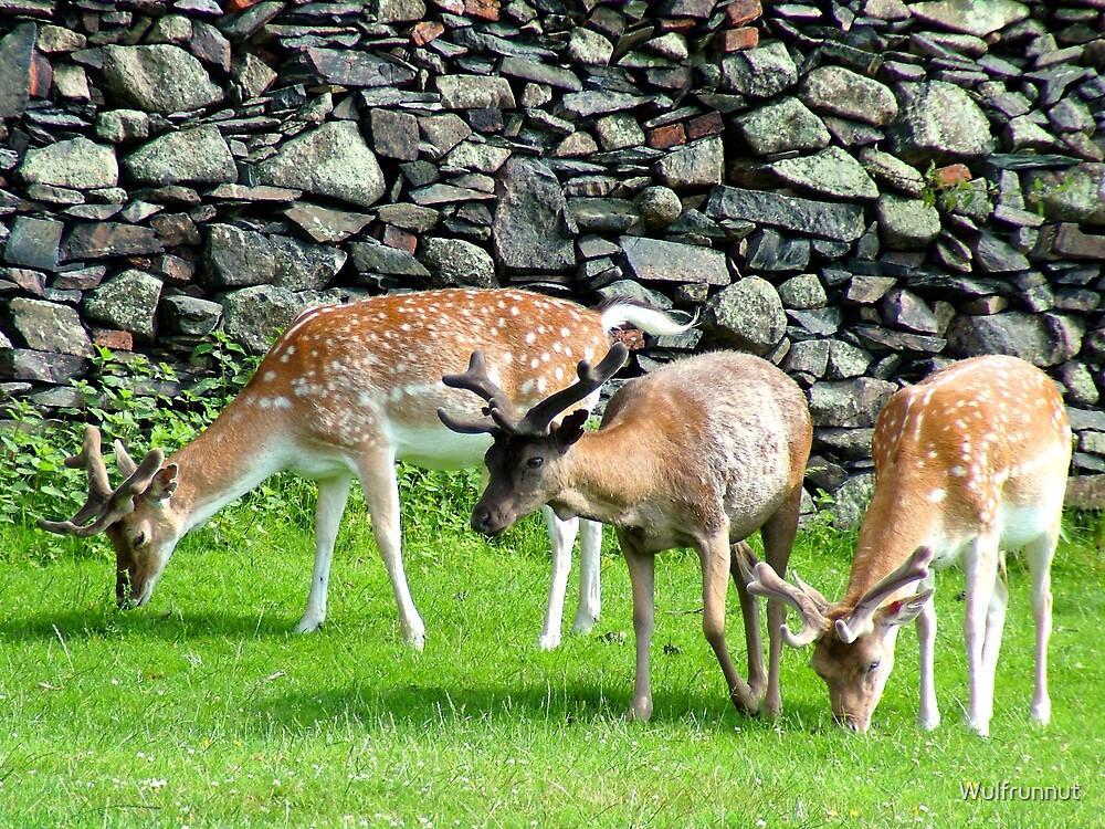 Deer, deer, deer! by Wulfrunnut