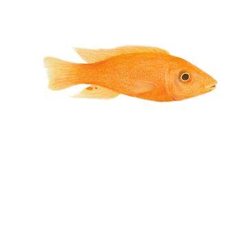 fish 07 cichlids malawi lake by dai-dai