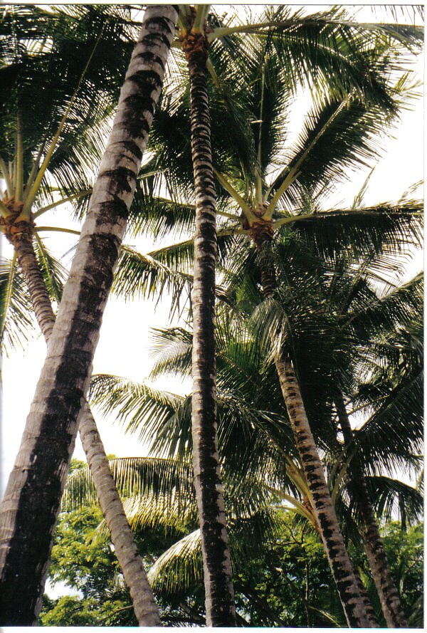 Palms by clairet