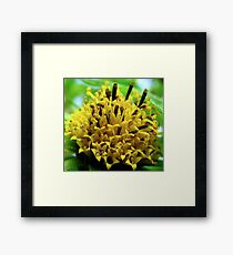 A beautiful Buddy Framed Print