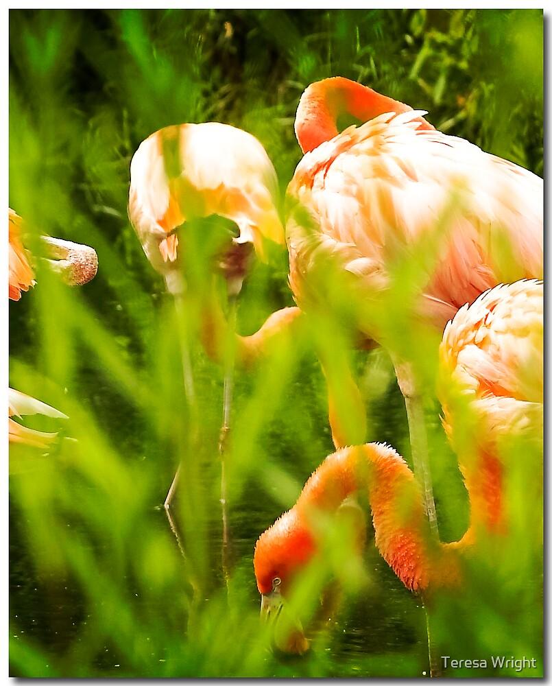 Flamingos by Teresa Wright