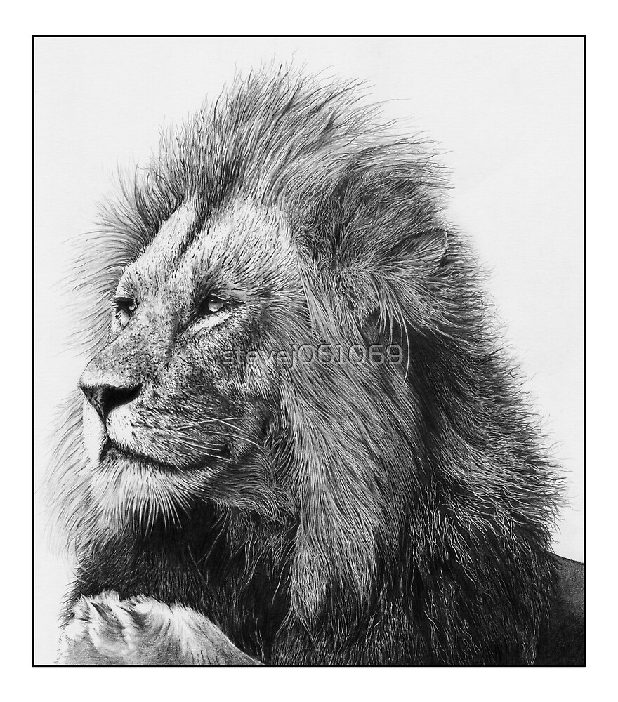 Lion by stevej061069
