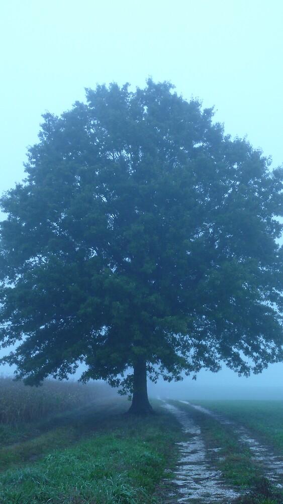 my favorite tree by Nina Andrews