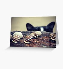 Cat Snails Greeting Card