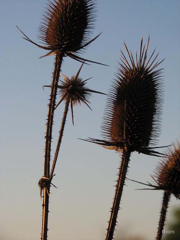 Slight Breeze by thorn