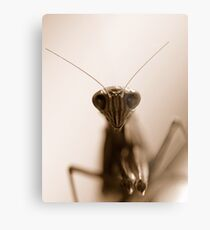 Creepy crawley Metal Print