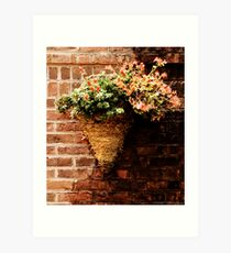 Flowers on a wall  Art Print
