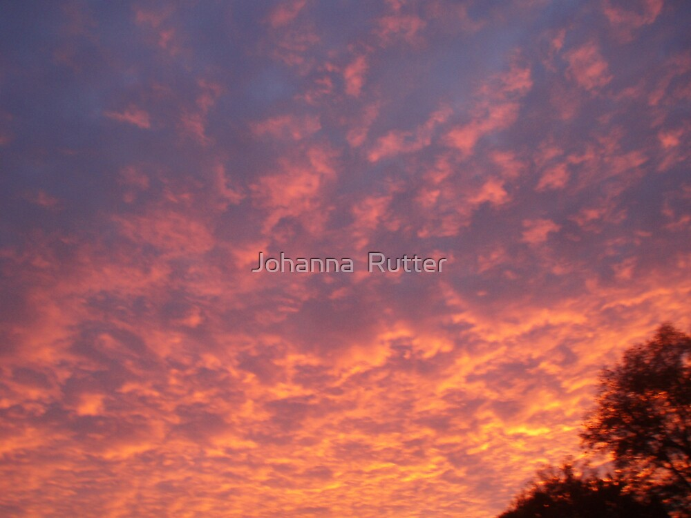 Sunset with trees by Johanna  Rutter