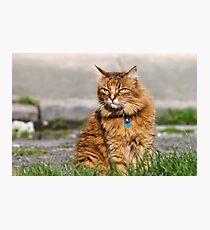 Grumpy cat Photographic Print