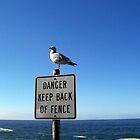Killer Gull by digitaldavers