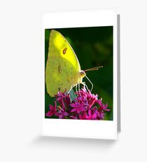 Male Cloudless Sulphur Butterfly Greeting Card