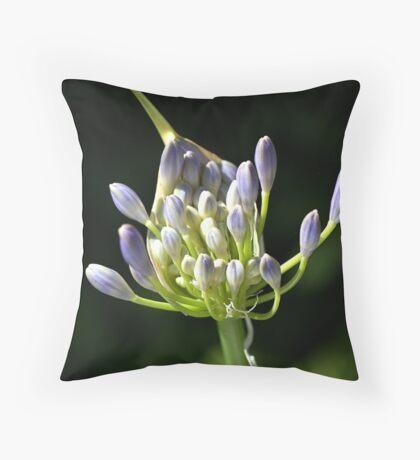 A Glow On Agapanthus Throw Pillow