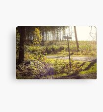 Wilderness Drive Canvas Print