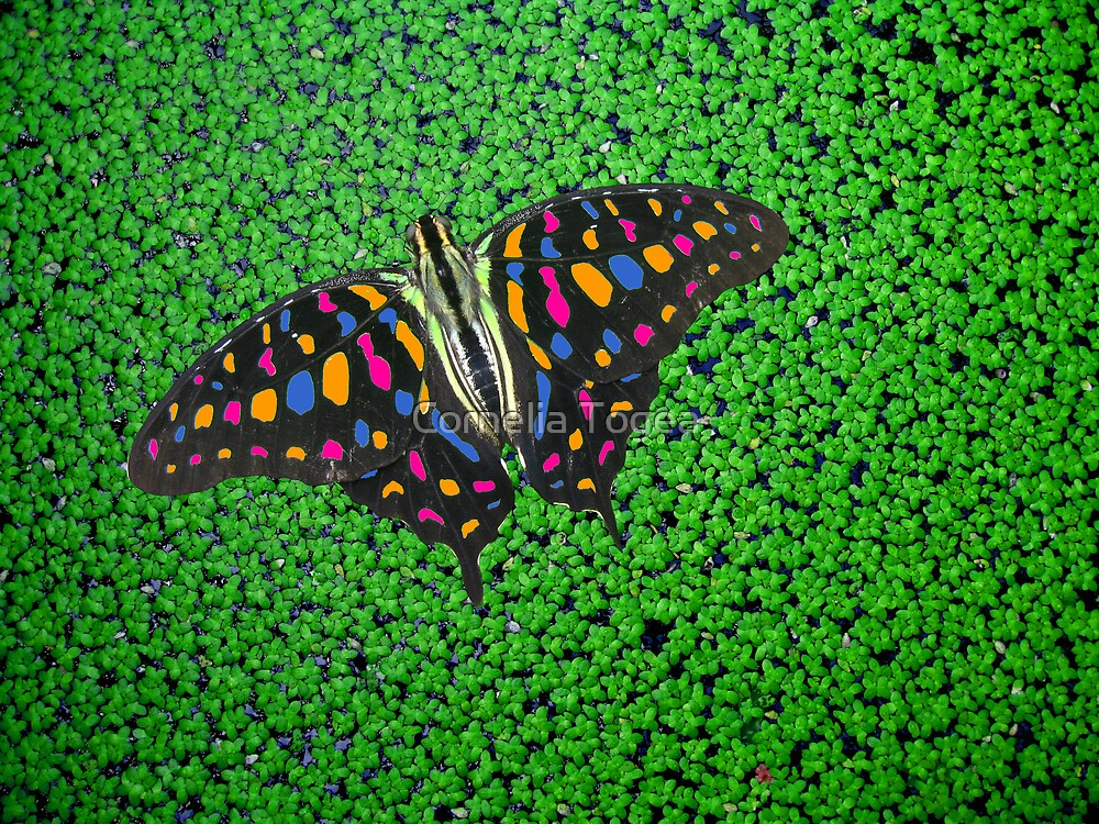 rainbow butterfly by Cornelia Togea