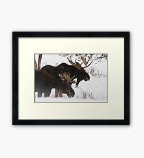 Moose Bros. #2 Framed Print