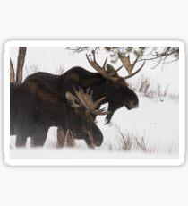 Moose Bros. #2 Sticker