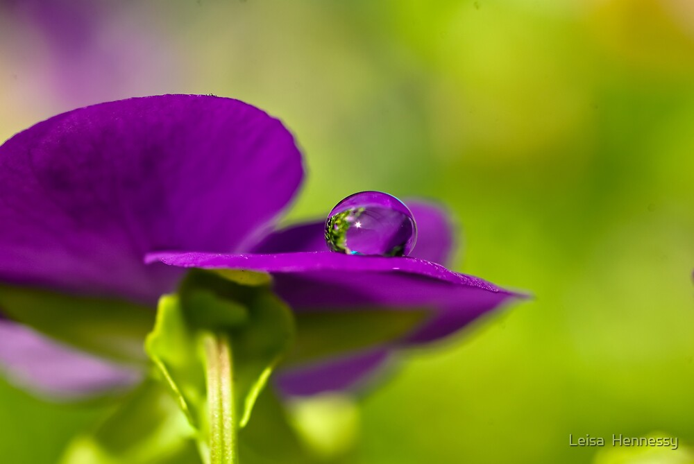 Droplet by Leisa  Hennessy