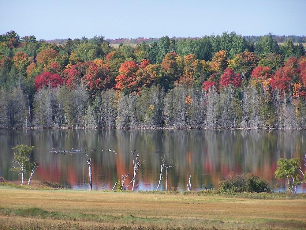 Fall Forest by Gene Cyr