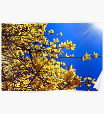 Yellow flowers blue sky Poster