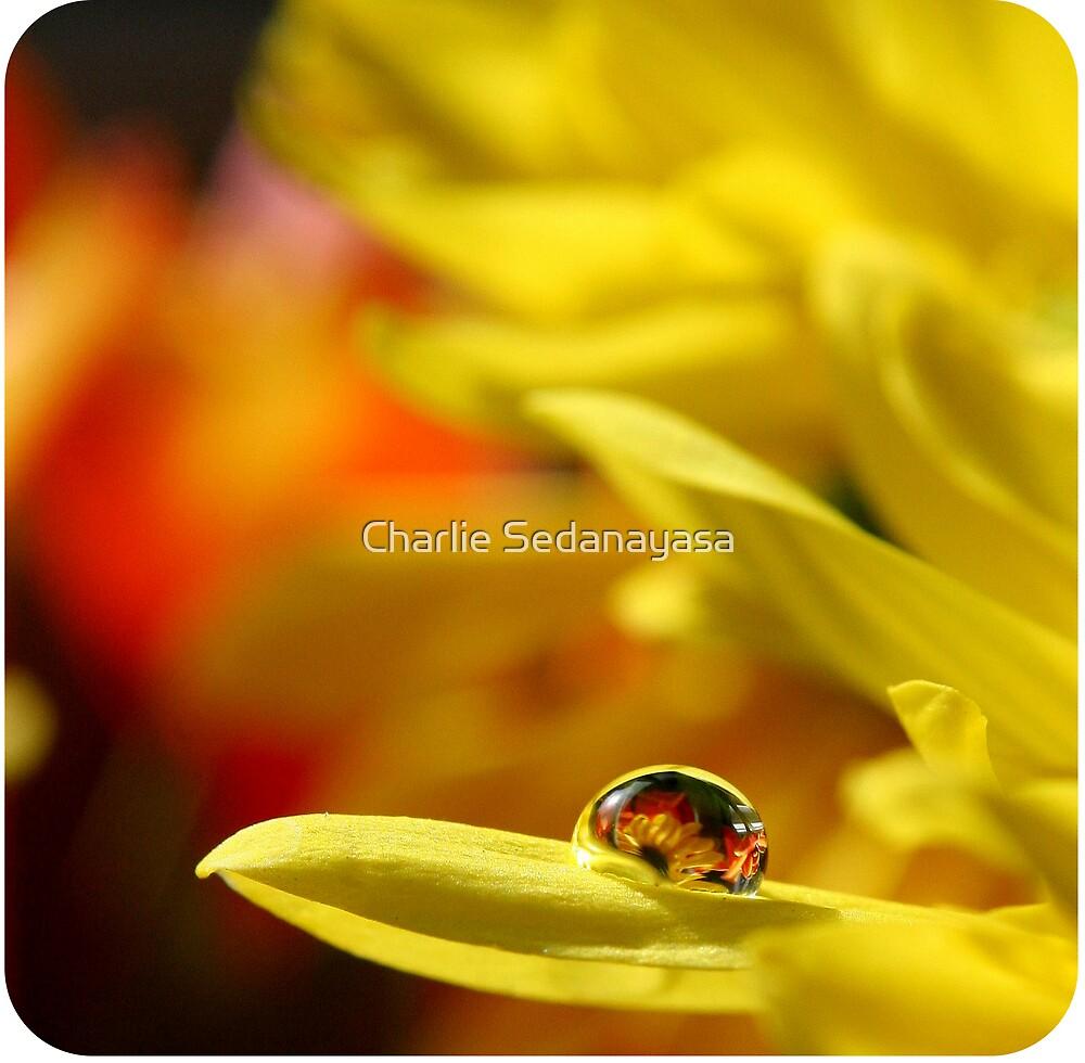 more mellow yellow by Charlie Sedanayasa