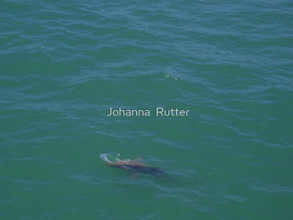 Shark at myrtle beach by Johanna  Rutter