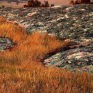 """Grass Stream"" by Phil Thomson IPA"
