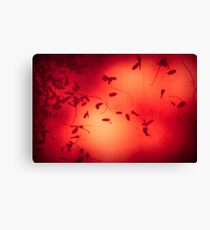 Beneath a Red Sun Canvas Print