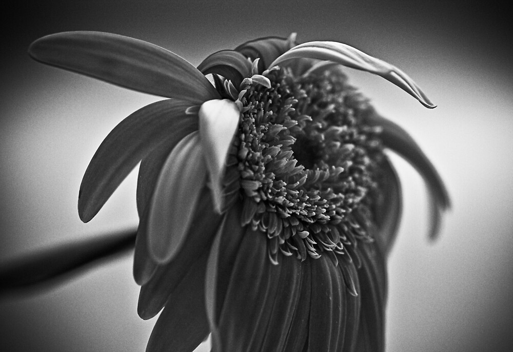 Wilted by Michael Mancini