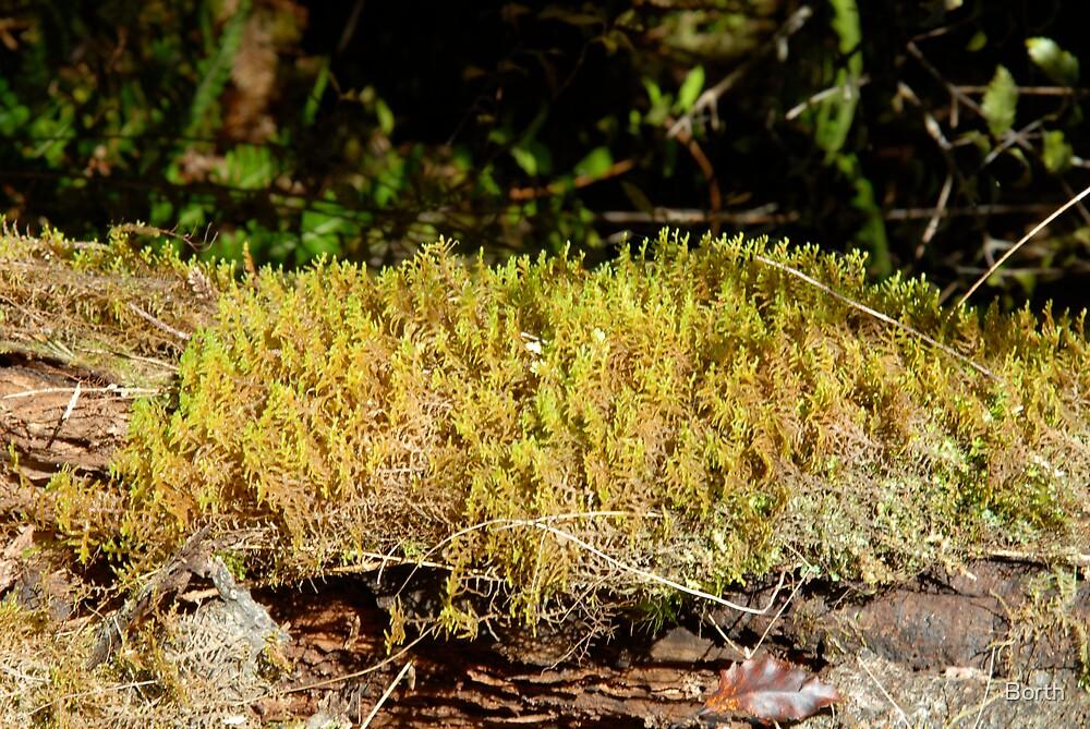 Moss by Borth