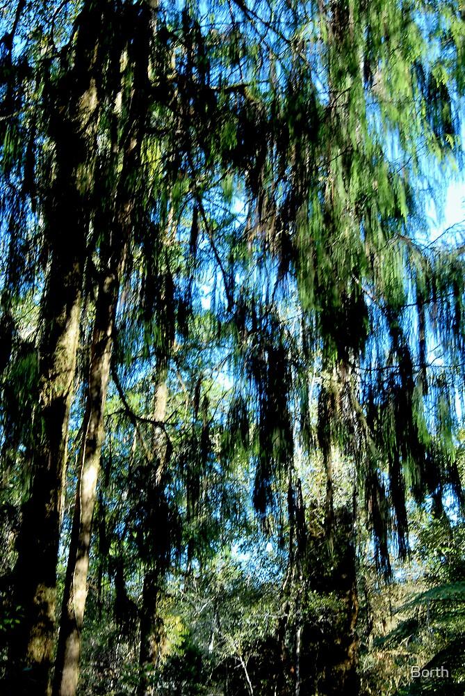Trees by Borth
