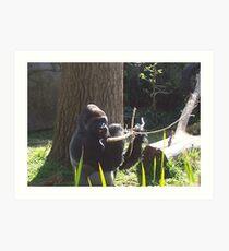 Melbourne Zoo Art Print