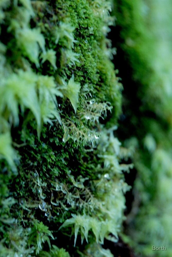 Moss Drips by Borth