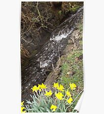 Spring stream and yellow daffodils  Poster