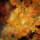 Warmth by Astrid Ewing Photography