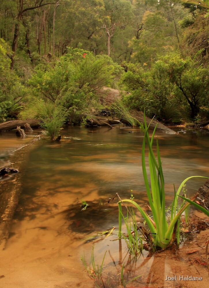 Mountain Creek by Joel  Haldane