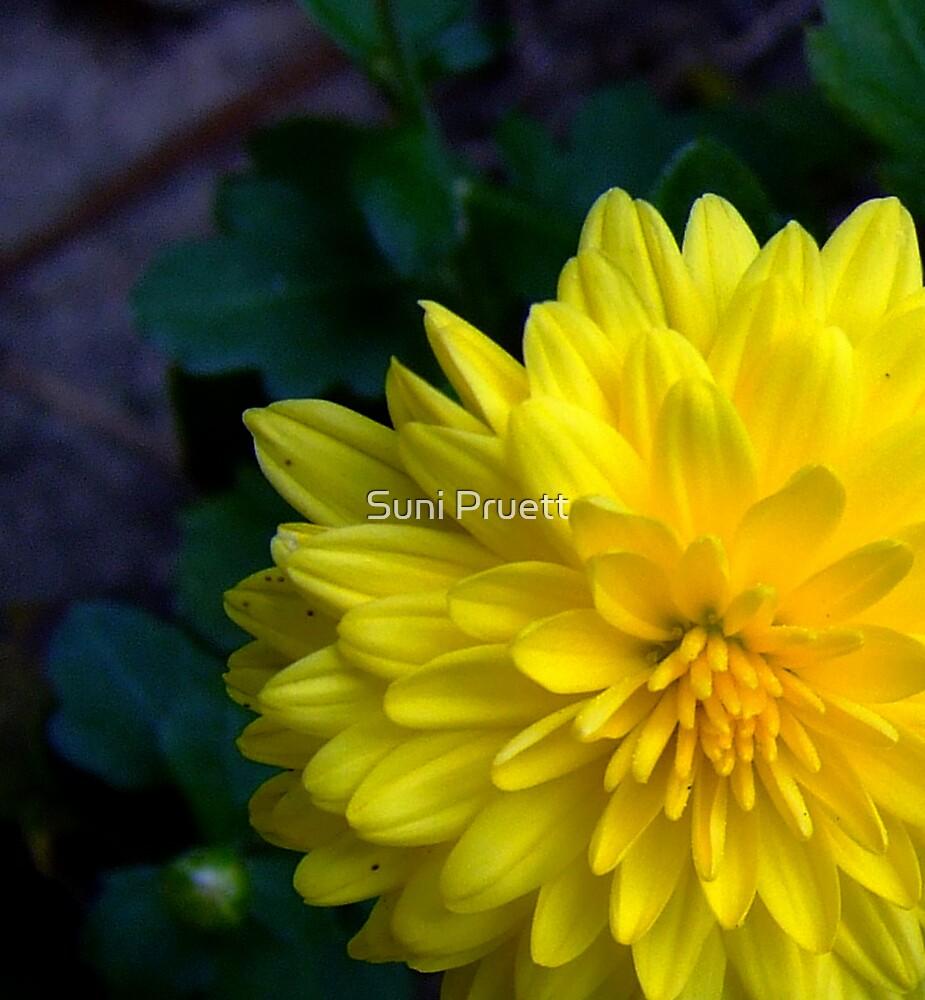 Marigold Shmarigold...I Still Think Im Pretty No Matter What You Call Me by Suni Pruett