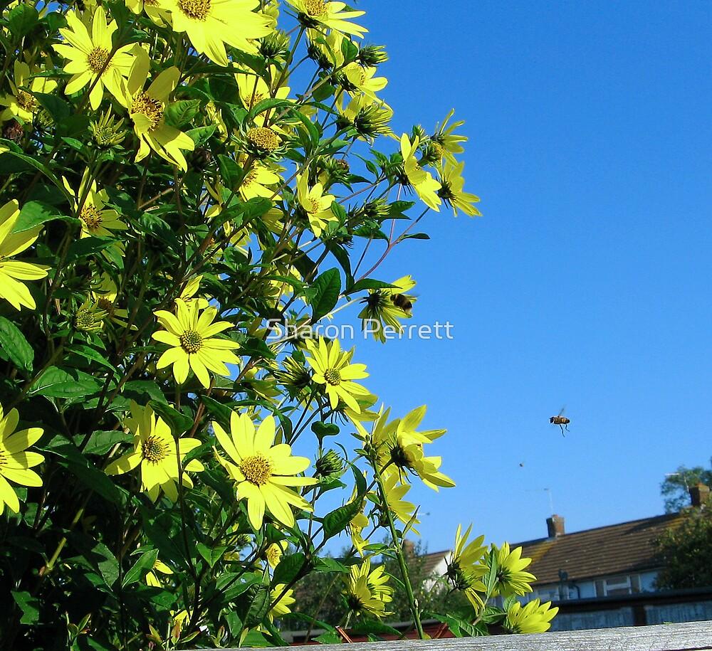 Sunny Flowers by Sharon Perrett