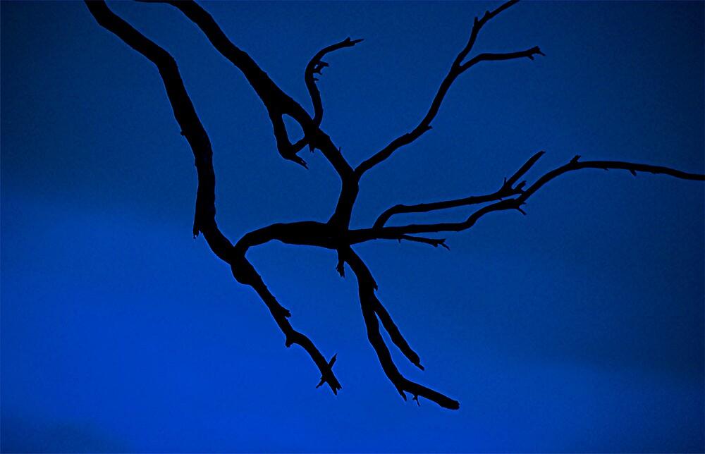 Blue  by Princessbren2006