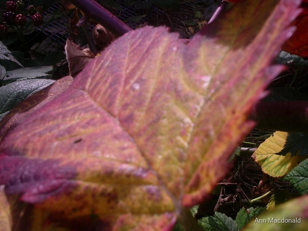 Autumn leaf by Ann Macdonald