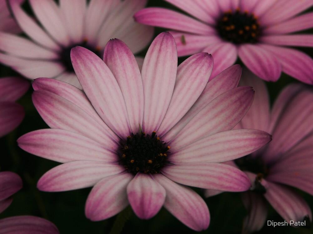 Flowers by Dipesh Patel
