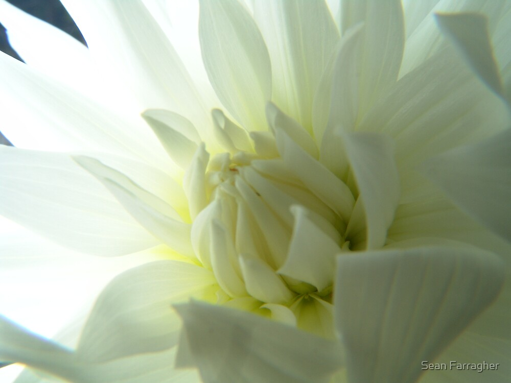 NOVEMBER  FLOWER by Sean Farragher