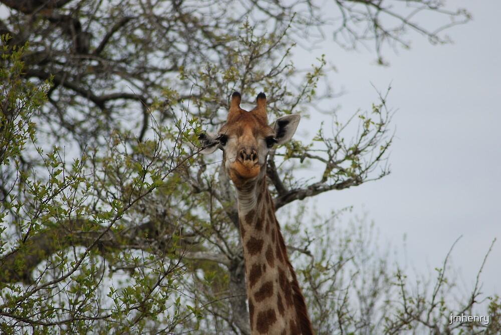 Giraffe by jmhenry