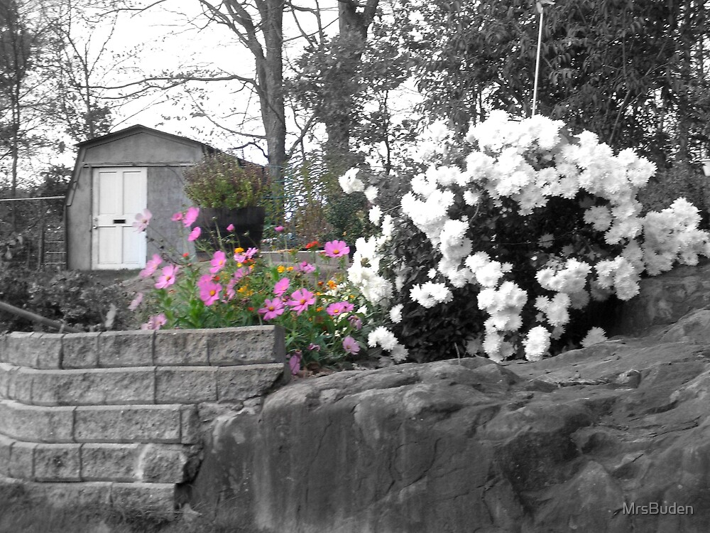 Countrytime with selective colors by MrsBuden