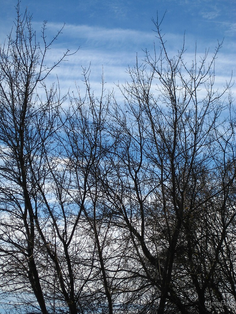 Trees against a blue sky by chem6a
