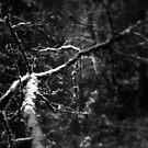 snowy Oregon forest 7 by Dawna Morton