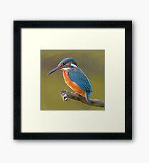 Kingfisher bird print Framed Print