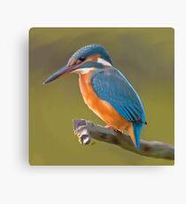 Kingfisher bird print Canvas Print